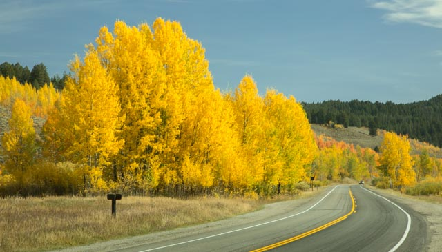 An outstanding display of golden aspens lined many stretches of the road.